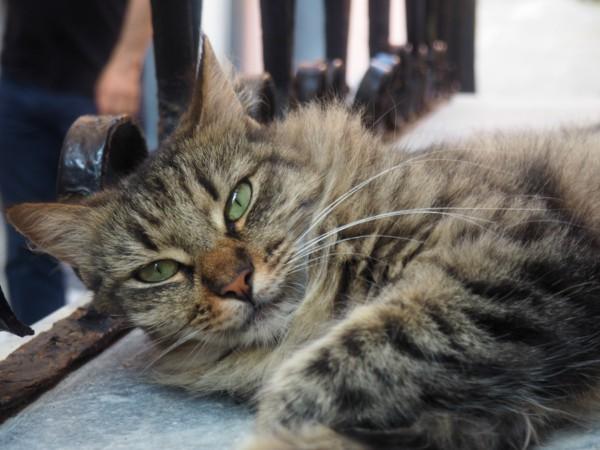 Porto Venere cat