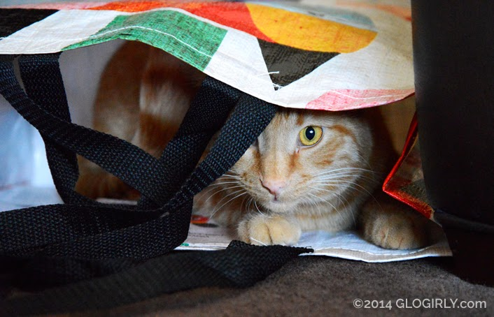 Waffles peeking out of shopping bag