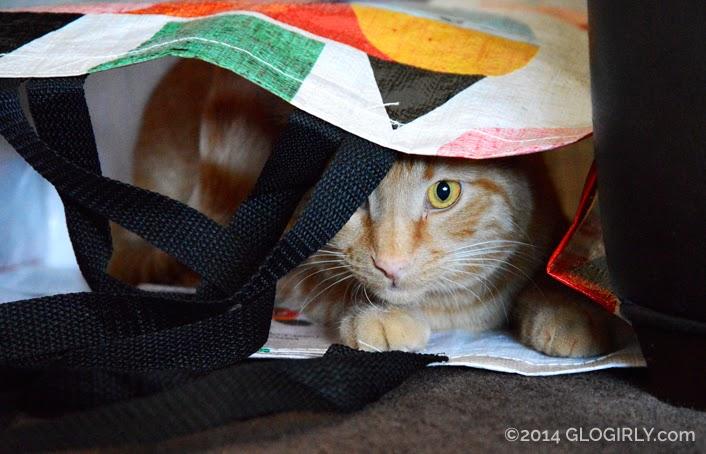Waffles peeking out of shopping bag