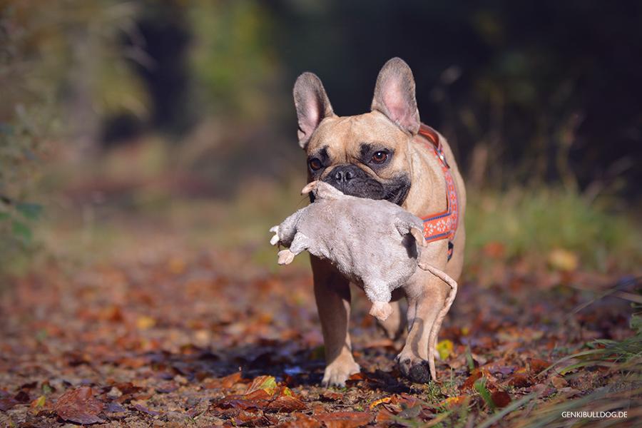 Huneblog Französische Bulldogge Ikea Ratte Hundespielzeug Wald Herbst Bully Hund