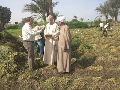 وكيل زراعة الفيوم يتابع حقول النباتات الطبية والعطرية عشبة حشيشة الليمون كنز طبيعي لتقوية المناعة