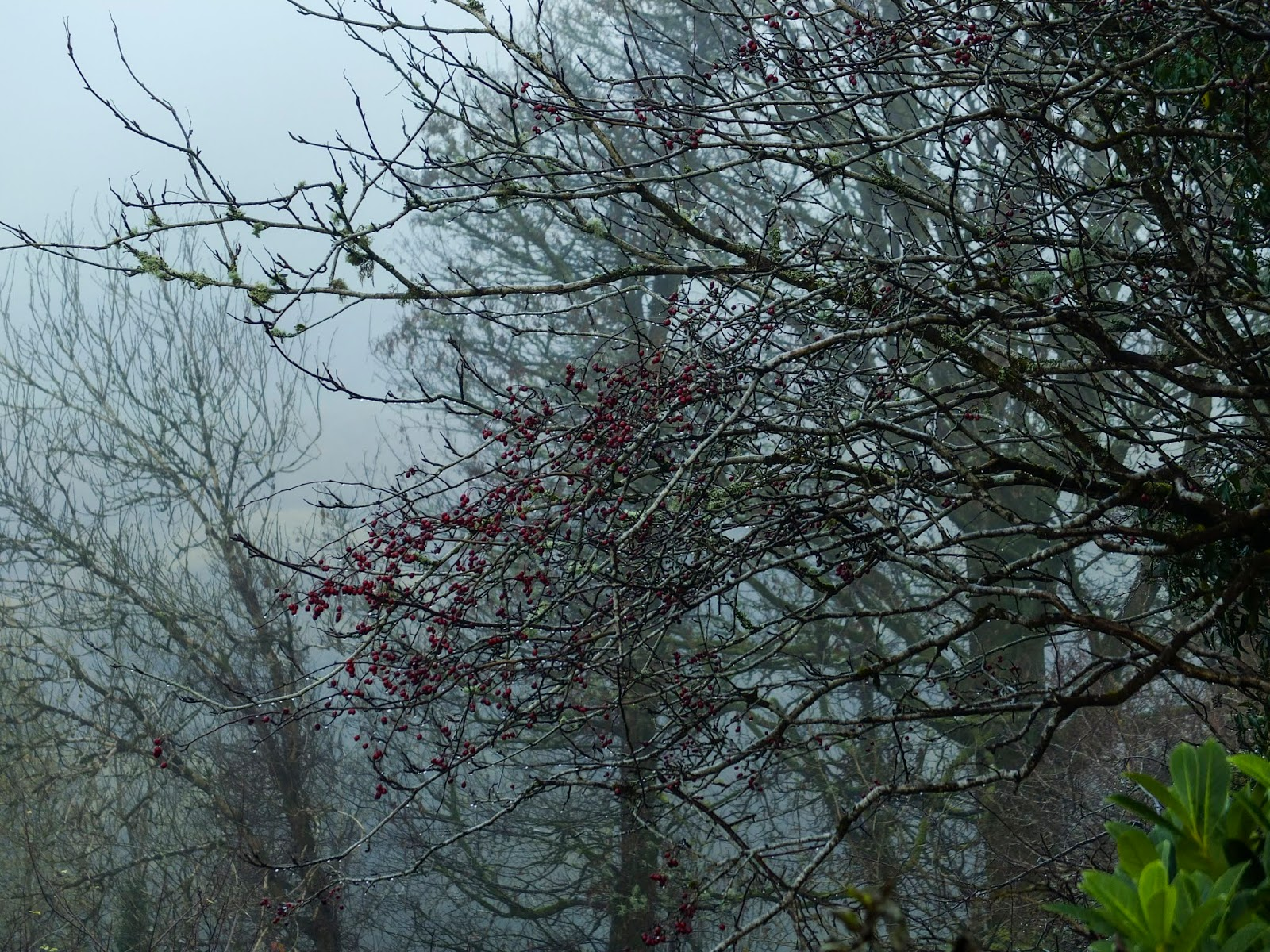 Misty and foggy bare tree branches.