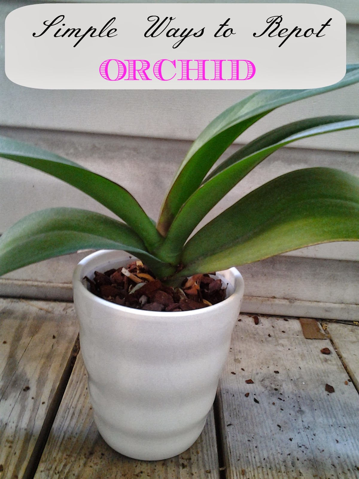 Life Between Potato And Rice Simple Ways To Repotting Orchid