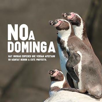 « NON À DOMINGA ! »