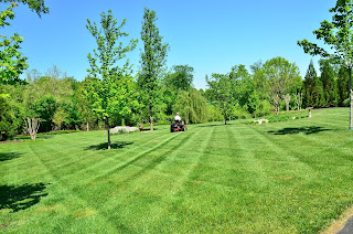 lawn care in athens