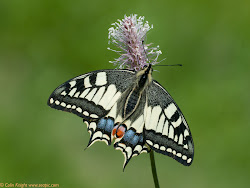 Click butterfly to view Sue's blog:-