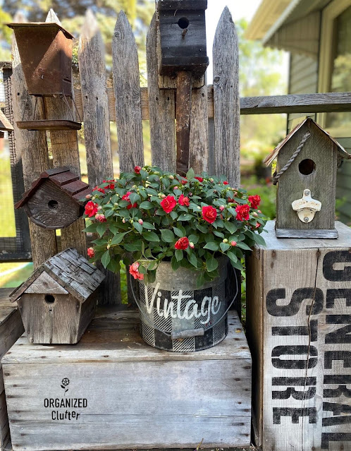 Photo of red double impatiens planted in a stenciled bucket