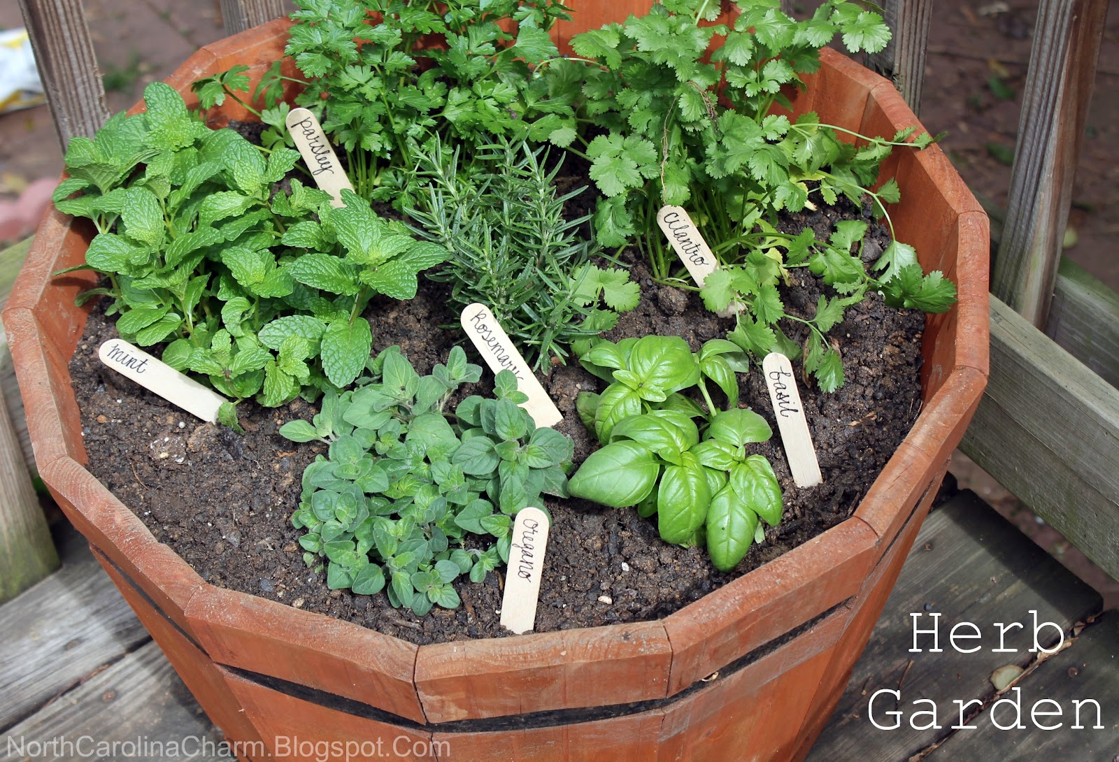 Herb Planter Pot Diy Herb Garden Carolina Charm