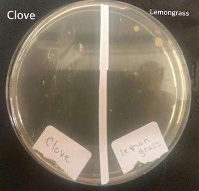 Germ fighting essential oils: ckove and lemongrass