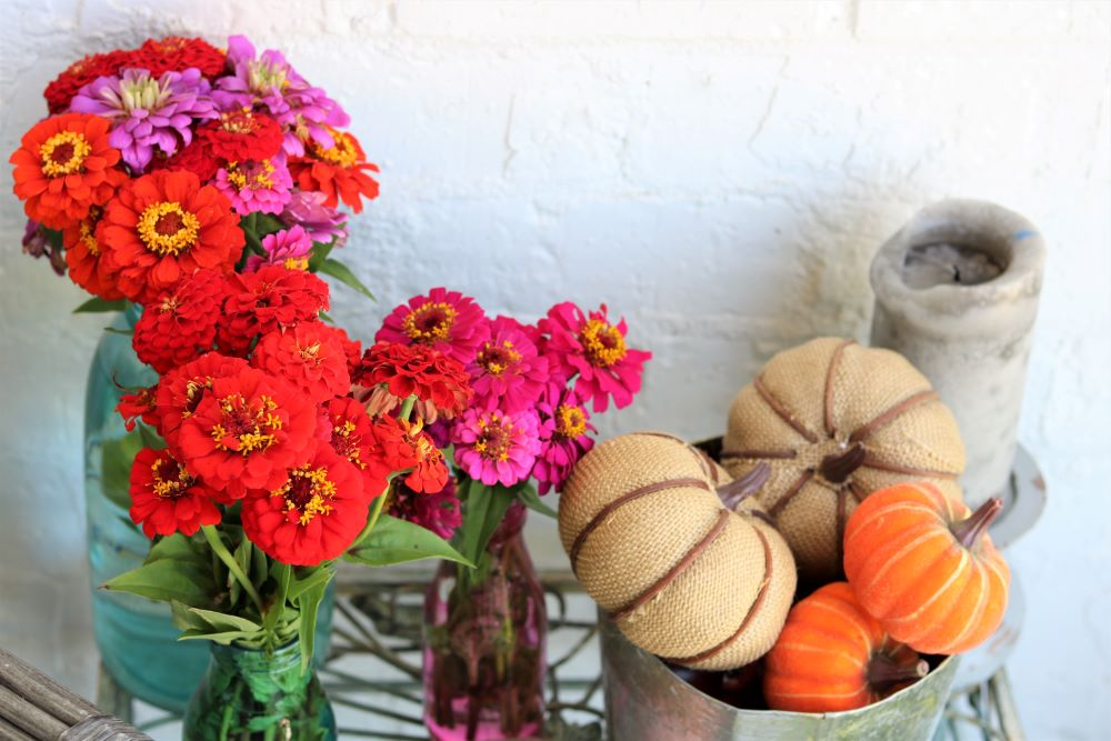 zinnias-bouquets-decorating-fall-porch-décor-athomewithjemma