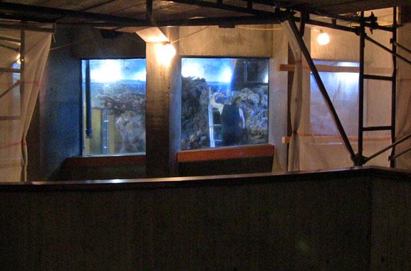 New England Aquarium News and Updates: 10/01/2012 - 11/01/2012