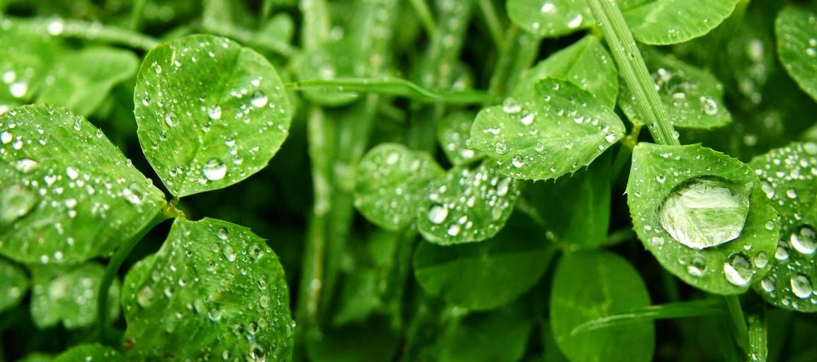 Plantas y condensacion