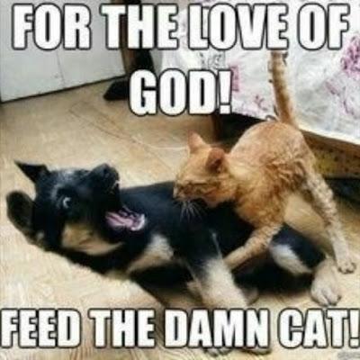 Feed the damn cat...