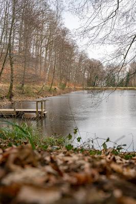 Blättersbergweg Rhodt  Winterwandern Südliche Weinstraße  Rietburg - Villa Ludwigshöhe - Edenkoben 21