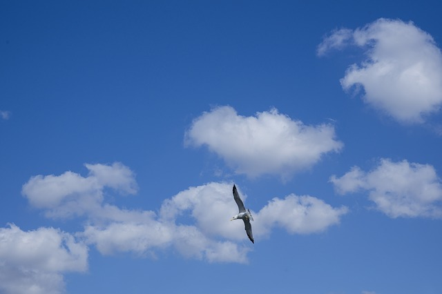 Clean, blue sky