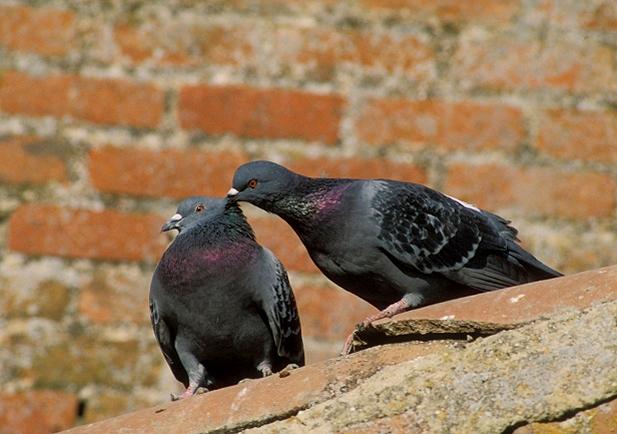 control de aves urbanas en Zaragoza