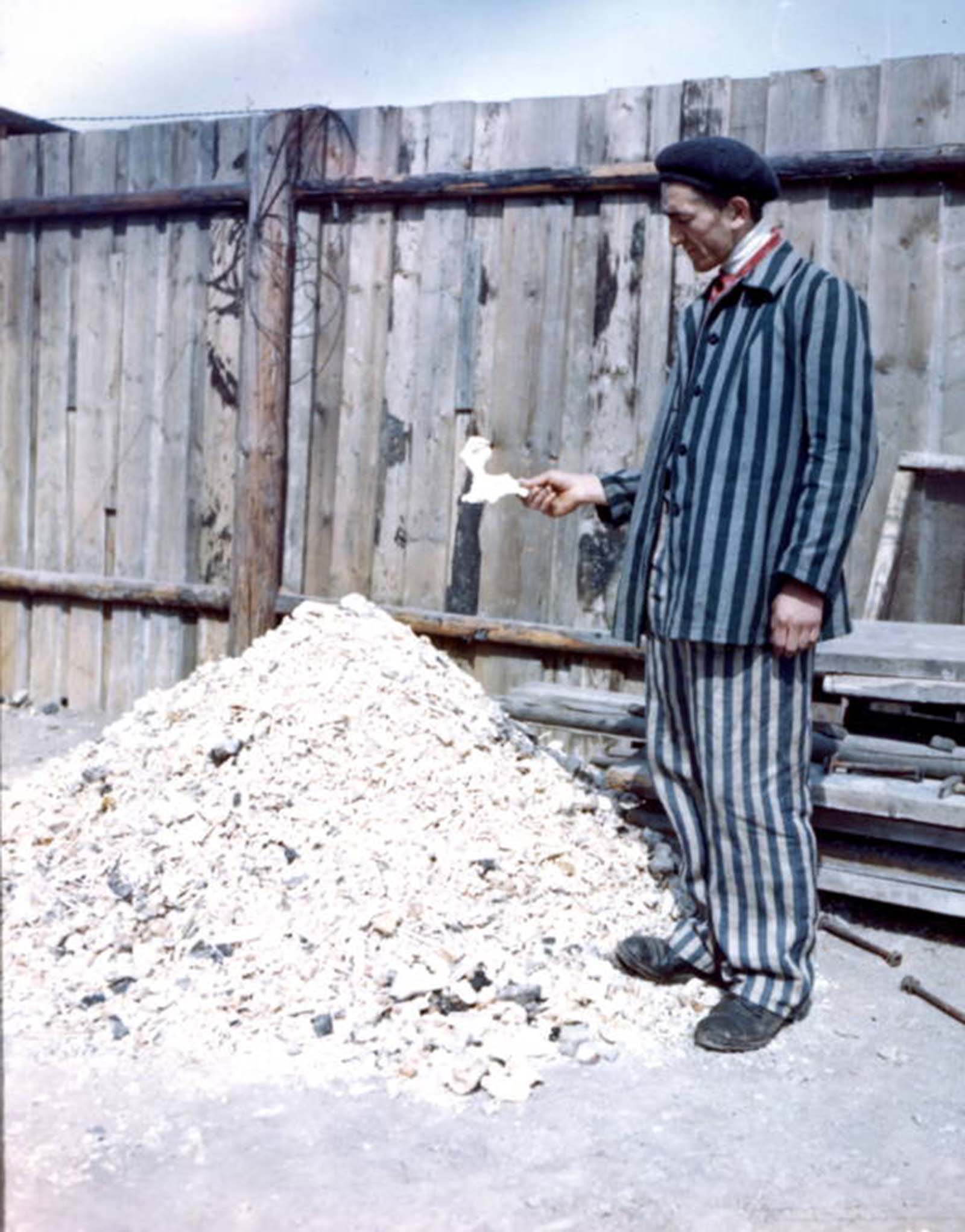 A former prisoner holds a human bone from a large pile of other bones from the Buchenwald concentration camp's crematory. 1945.