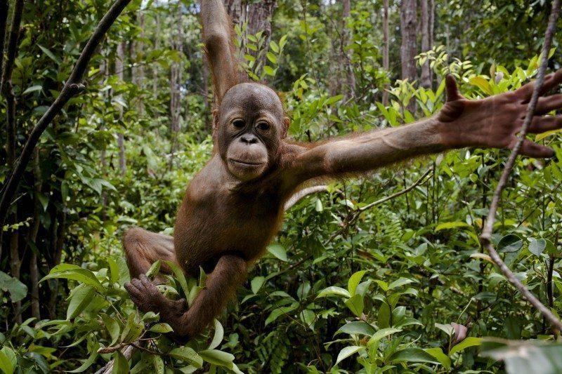 membela-hutan-indonesia-dari-perusahaan-perusak-kawasan-lindung