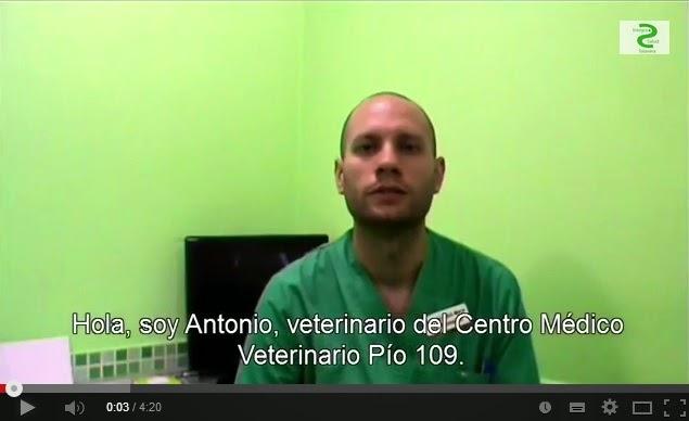 Veterinario Antonio Folch