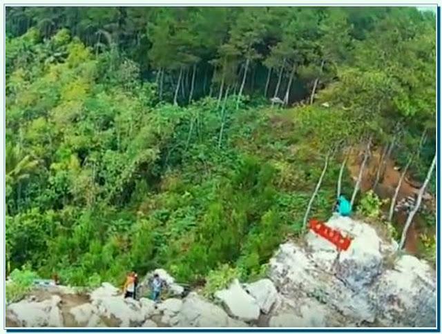 Wisata Hutan Pinus Kalilo Purworejo