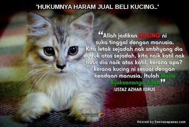 Haram Jual Beli Kucing