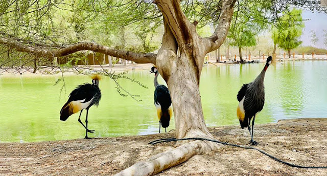Birds at Love Lake Dubai
