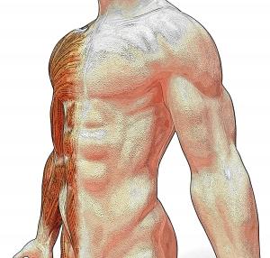 Posizione dei sintomi lato del corpo - 5 Leggi Biologiche