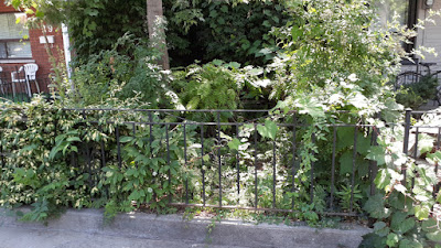 Beaconsfield Village Toronto front yard summer garden cleanup before by Paul Jung Gardening Services--a Toronto Organic Gardening Company