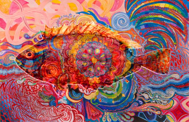 pesce coniglio allucinogeno