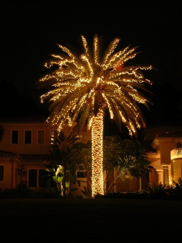 Christmas Light Palm Tree Ideas Christmas Decorating