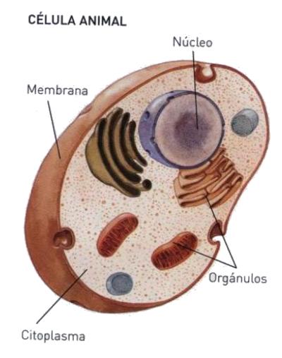 Ciencias Naturales y mucho ms Las clulas