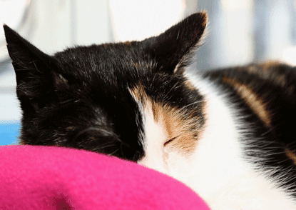 Meet the cats in our sponsor pens - Gabrielle