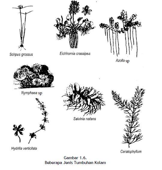 Beberapa Jenis Tumbuhan Kolam