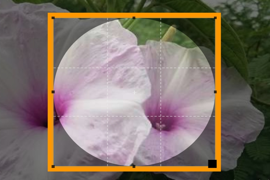 طريقة جعل زوايا الصورة دائرية بدون برامج