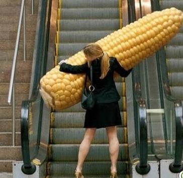 Resultado de imagem para milho grande