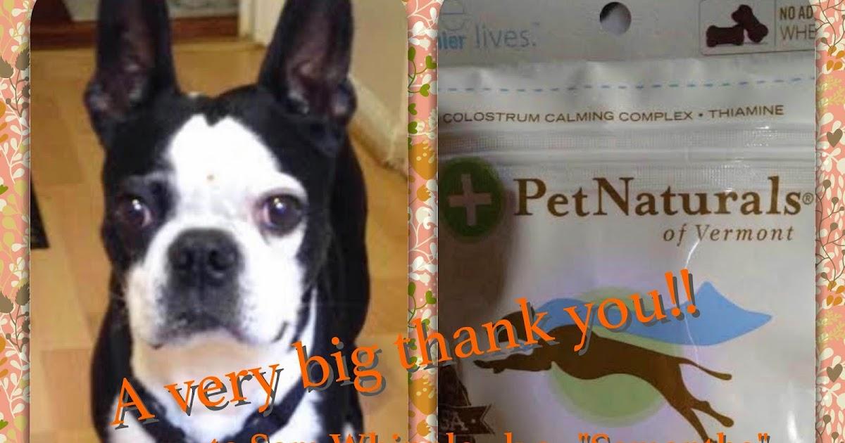 Northeast Boston Terrier Rescue Vegas Says Thanks