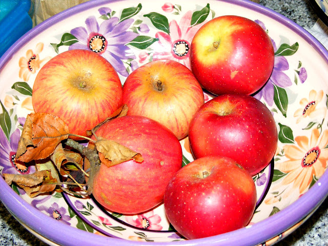Homegrown apples Reine des reinettes left, Red Delicious right. Indre et Loire, France. Photo by Loire Valley Time Travel.