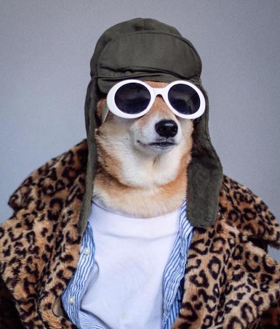 Chú chó chất chơi ăn mặc sành điệu còn hơn cả bạn