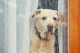 5 maneras fáciles de deshacerse de la ansiedad del perro