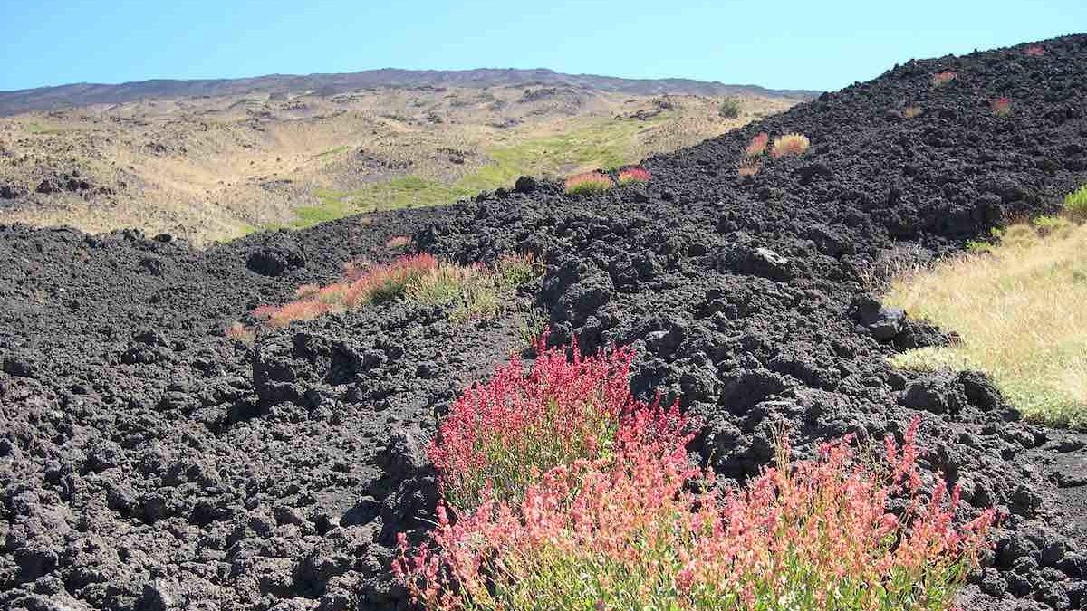 Il vasto patrimonio floristico dell'Etna