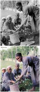 beras mentah didistribusikan oleh parbaringin