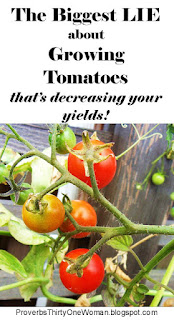 https://proverbsthirtyonewoman.blogspot.com/2018/06/the-biggest-lie-about-growing-tomatoes.html