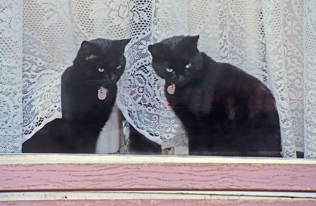 Companion Animal Psychology turns 8; two cats look out of a window