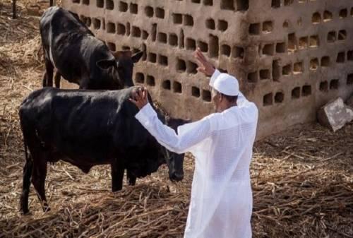 2019: Please Go Back To Your Village, Olapade Agoro Advises Buhari