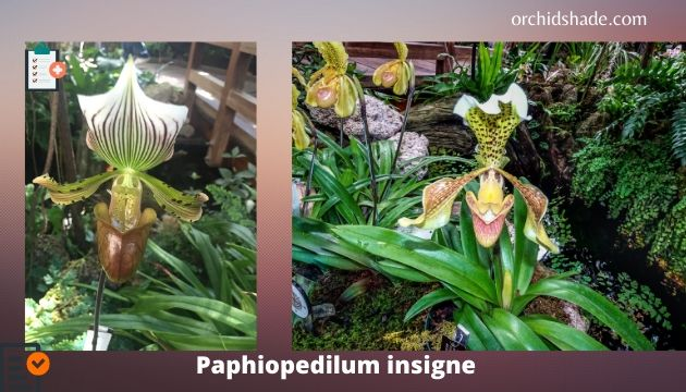 Red List 4 orchid species are reported in the IUCN