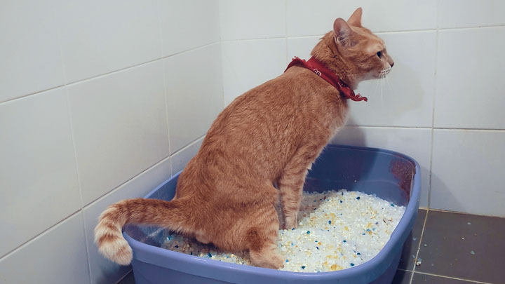 how-to-get-rid-of-cat-pee-smell-on-couch
