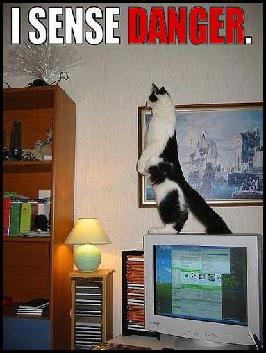 Funny standing meer-cat • I sense danger