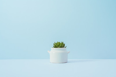 Minimalist cactus in a white pot
