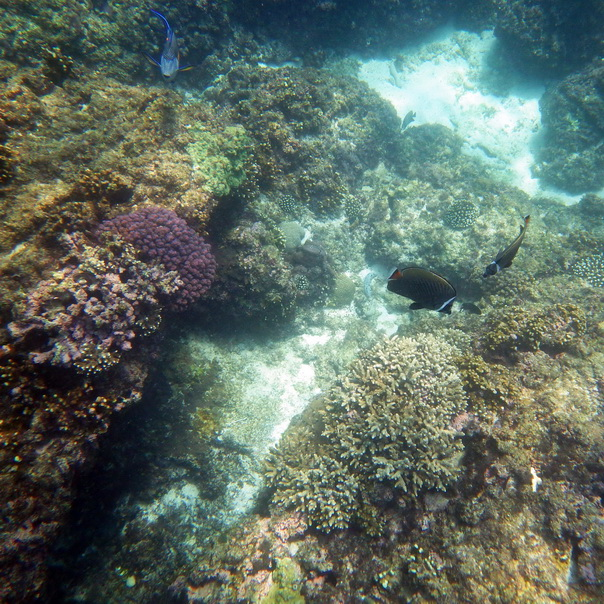 snorkeling, schnorcheln, daymaniyat, islands, inseln, fische, korallen, oman, Muscat, unterwasser, meer