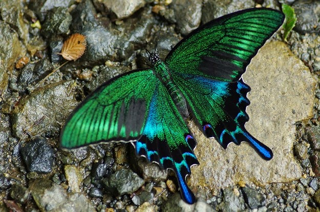 caterpillar-transformation-to-butterfly-2